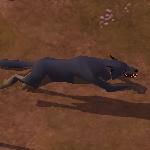 Wolfsfell
