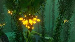Subanutica - Ressourcen Schlingpflanzensamenbüschel
