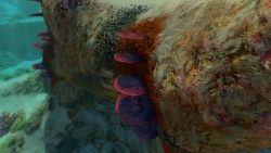 Subnautica - Ressourcen Tischkorallenprobe